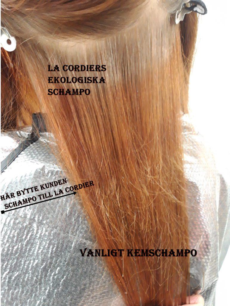 schampo som bleker håret